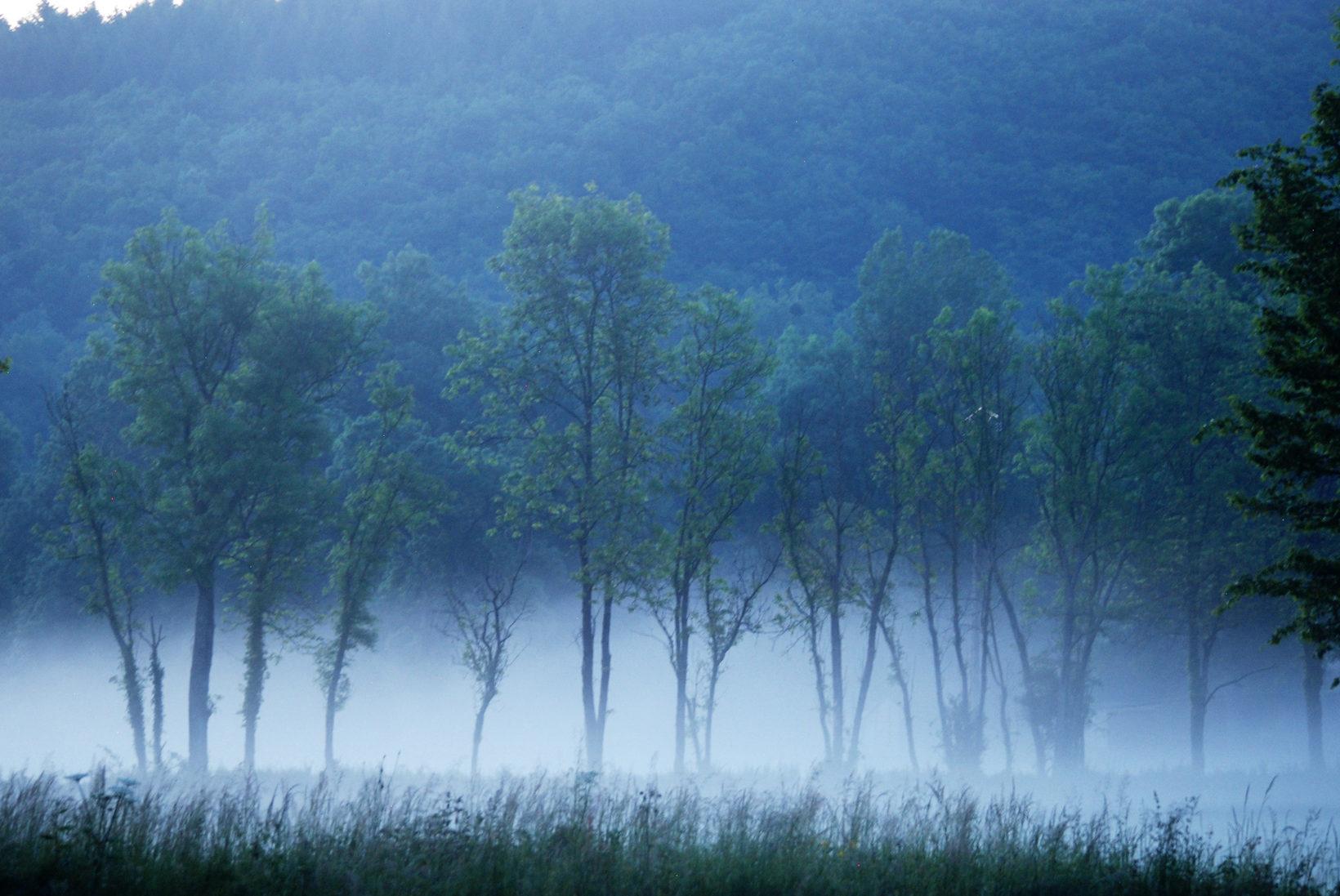 Chevroches Morning Mist